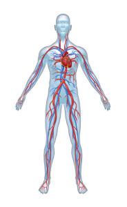 Cardiovascular_Diseases